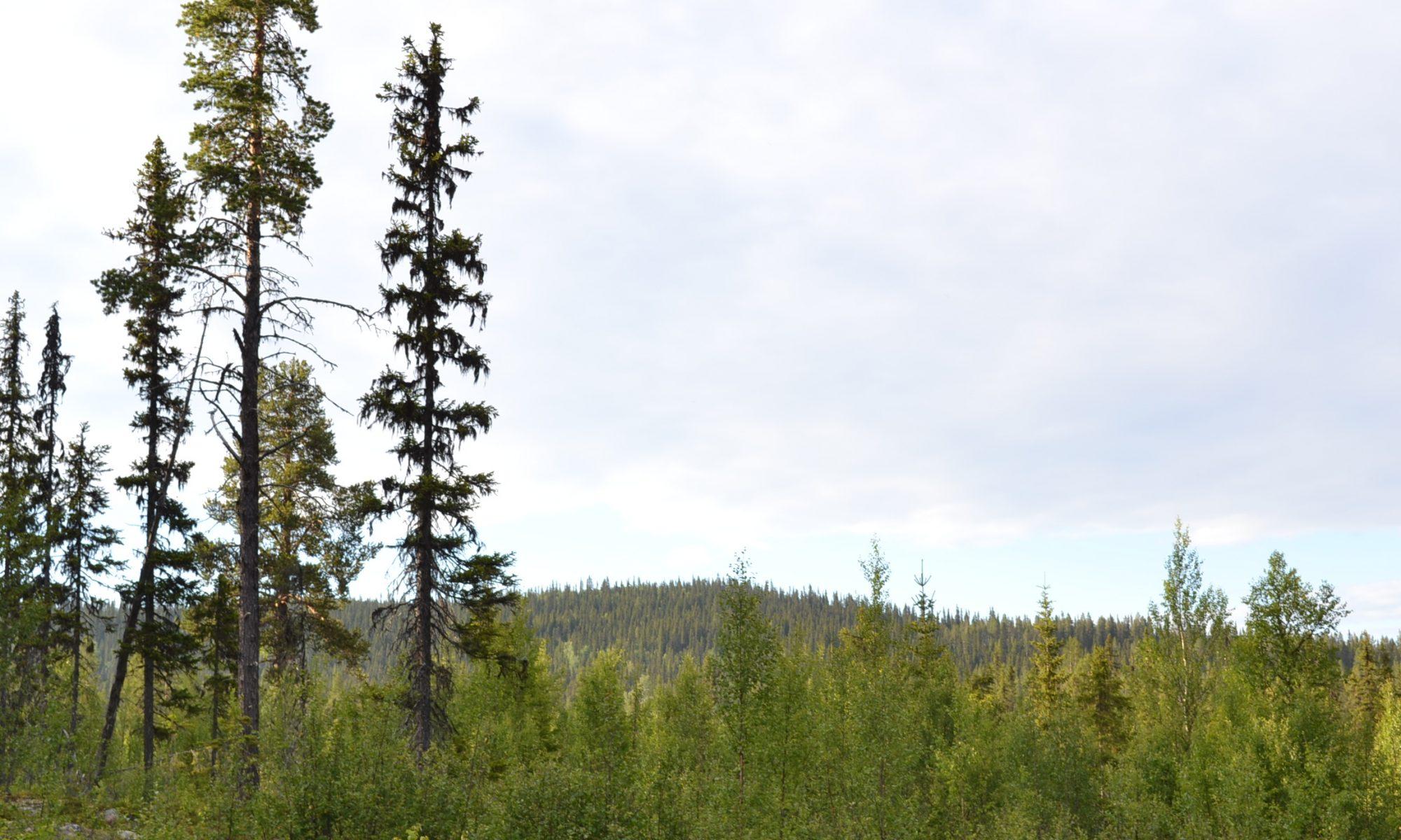 Hálgu - sounds of Sápmi